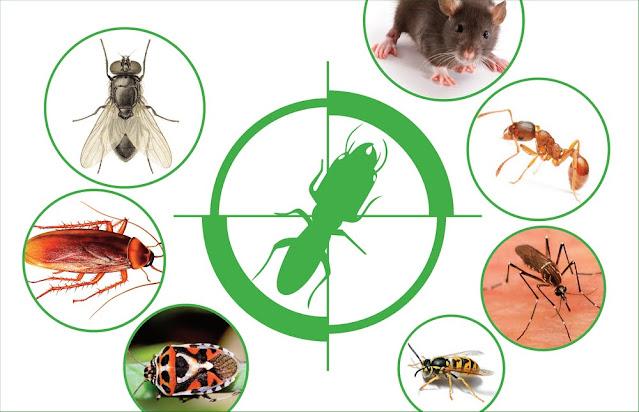 Phun muỗi tại huyện Thường Tín