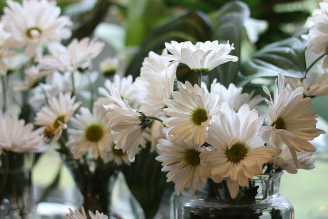 image of white daisy