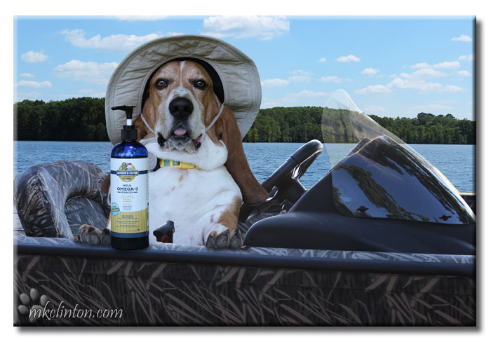 Basset Hound in boat with Bonnie and Clyde's Wild Omega-3 Fish Oil