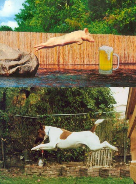 JIM'S INFO BARN: Thirsty Pig Vs  Rocket Dog