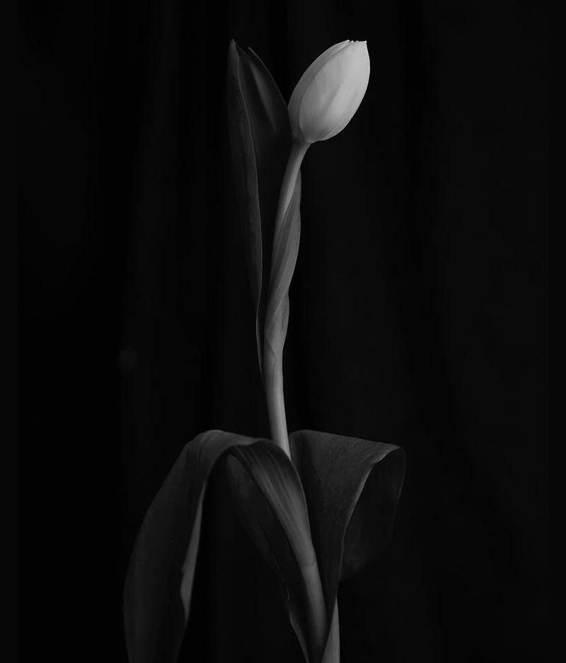 BF (II), by BOYZ & Flowers