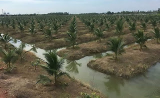 industri kelapa thailand