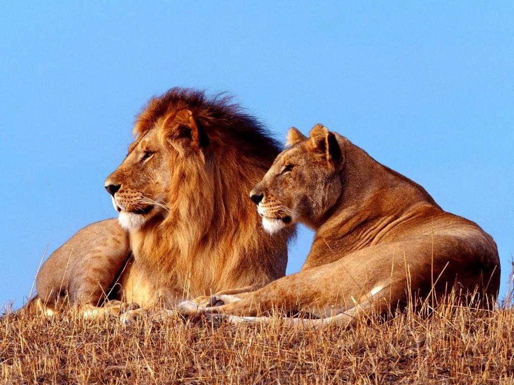Resultado de imagen para leon