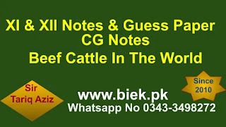 discuss about Beef Cattle in the World?