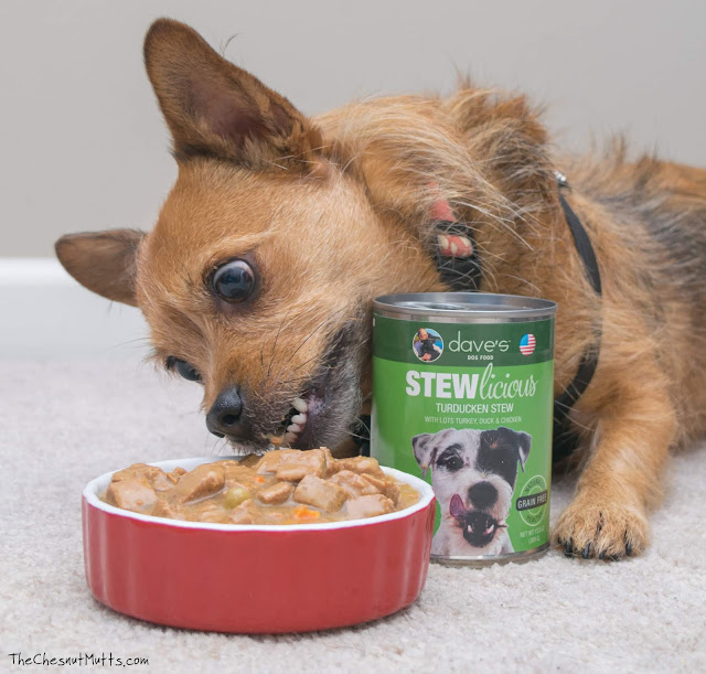 Mini Review: Dave's Stewlicious Canned Dog Food