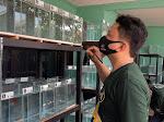 Pecinta Ikan Guppy, Adakan Latihan Bareng di Grabag