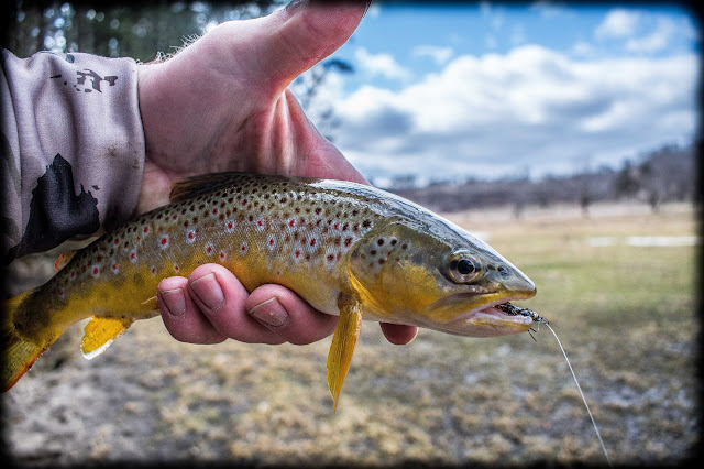 The Catching Chronicles    by Trout MaGee: A Must Have Fly