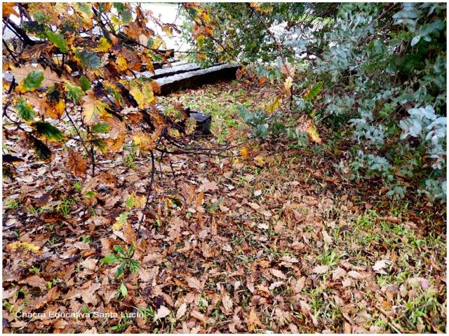 Suelo cubierto de hojas secas - Chacra Educativa Santa Lucía