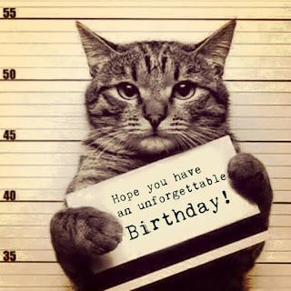 happy birthday angry cat