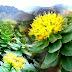 ऑक्सीजन का बड़ा सिलेंडर है ये छोटा सा पौधा, जानें इसके फायदे