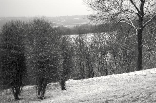 snow landscape trees