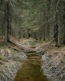 Ribbons strung between trees, over a stream in green woods