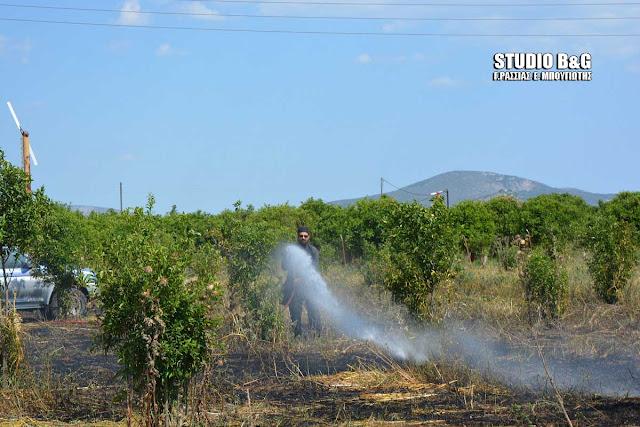 Αργολίδα: Πυρκαγιά στη Δαλαμανάρα