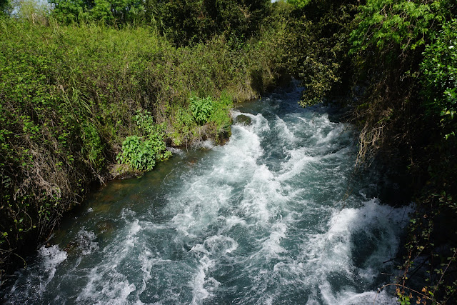 מים זורמים בשמורת תל-דן