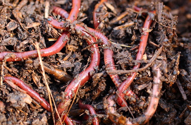 Worms%2Bfor%2Bworm%2Bfarms.jpg