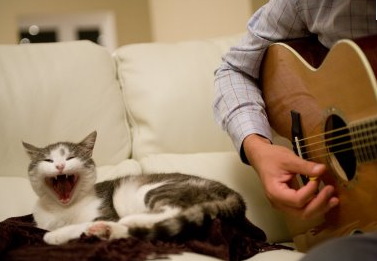 People Singing With Their Cat