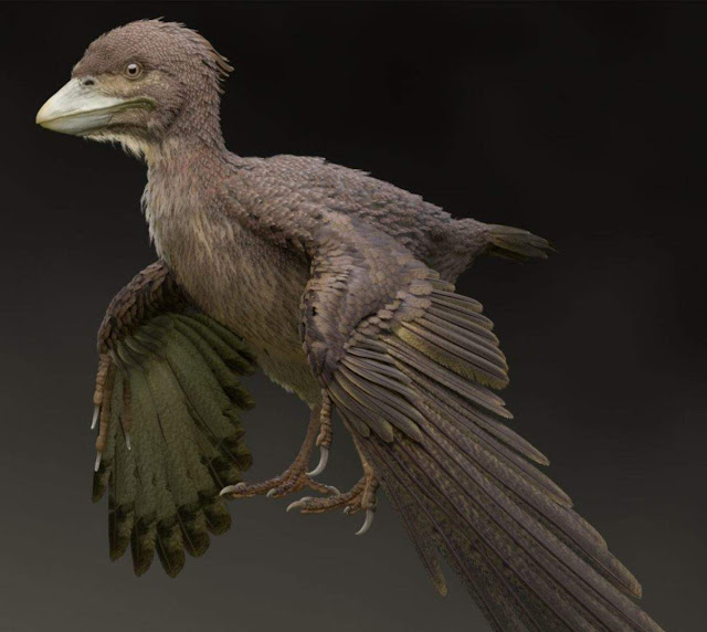 Newly Discovered Fossil Bird Fills in Gap Between Dinosaurs and Modern Fliers