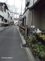 Narrow street lined with flower pots - Matsudo, Honshu, Japan