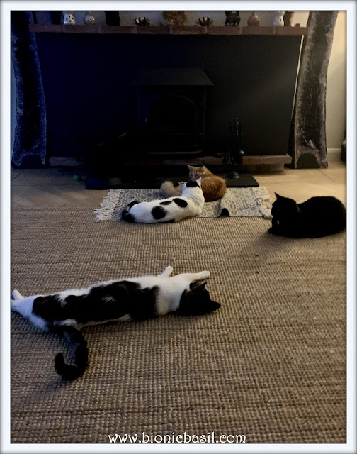 Snoozing In Front Of The Fire With The B Team Boys ©BionicBasil® The Pet Parade 387