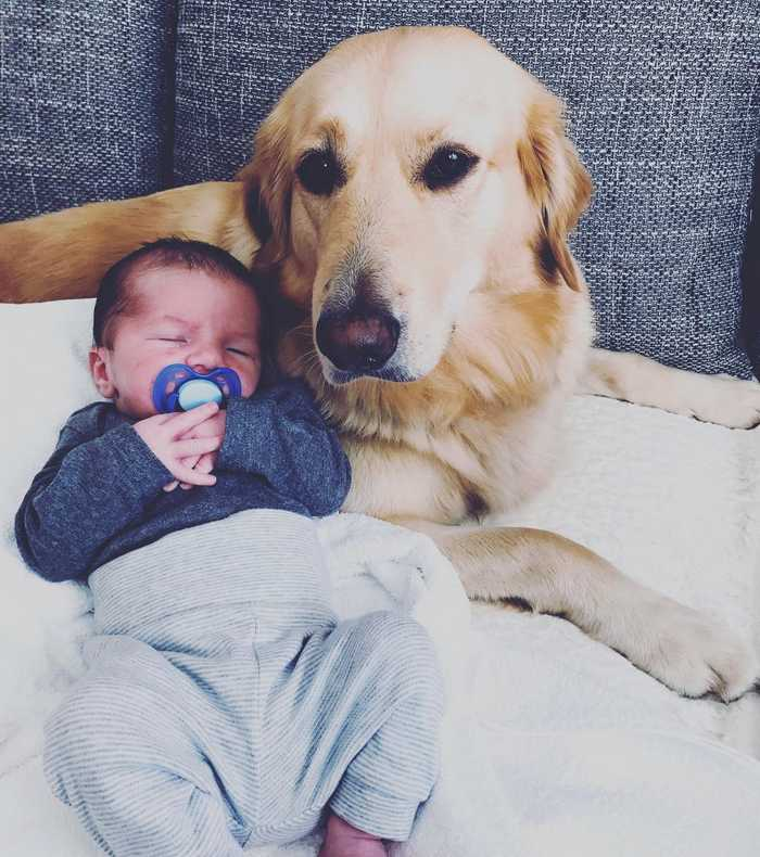 Tips to follow if my dog is jealous of my baby