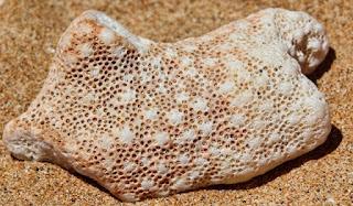 Cara Memasang Batu Koral