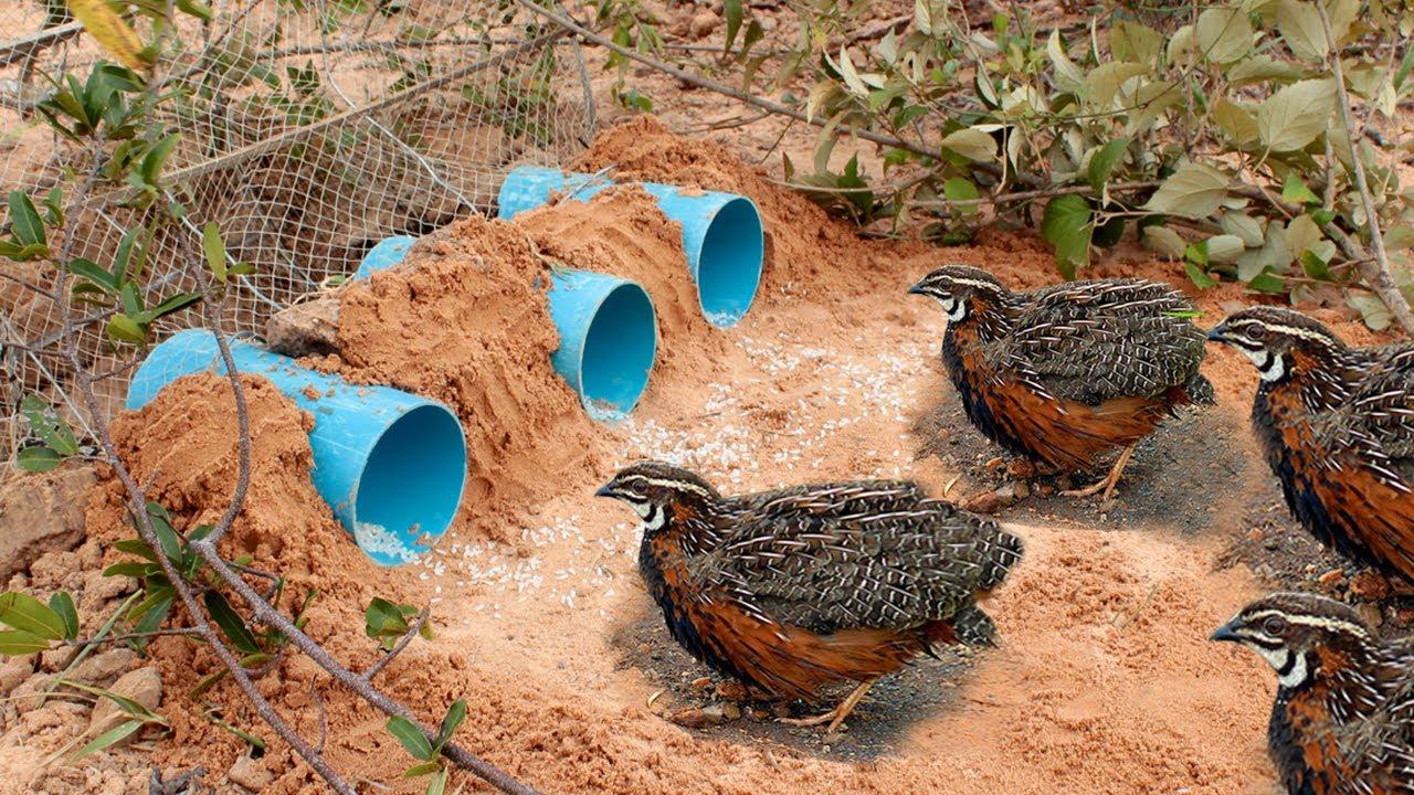 Pvc boruları kullanarak profosyonel bir kuş yakalama tuzağı kurabilirsiniz.
