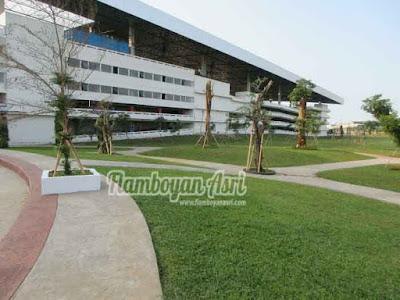 Tukang taman Surabaya Jual Rumput Gajah Mini