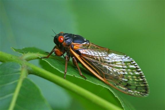 Ağustos Böceği - A Hayvan