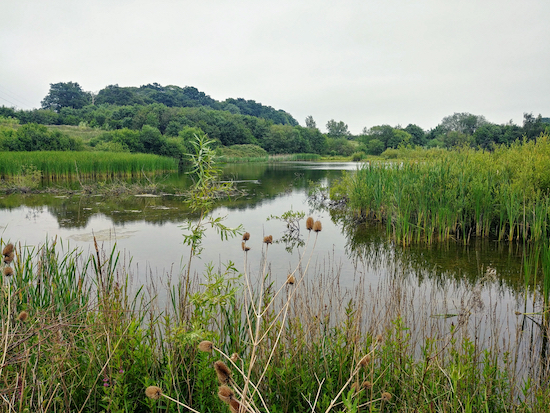 The lake on Walk 101 The Colney Heath Loop