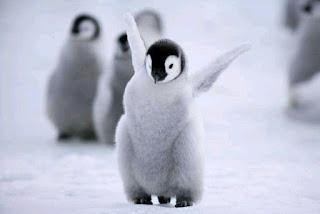 gambar anak pinguin imut