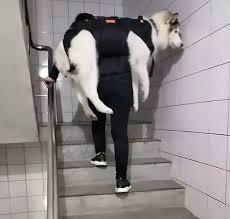 força muscular em cães