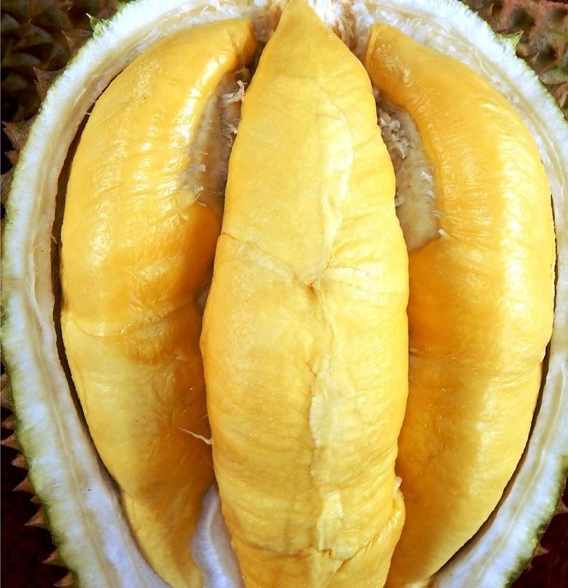 Bibit Tanaman Buah Durian Simas Riau