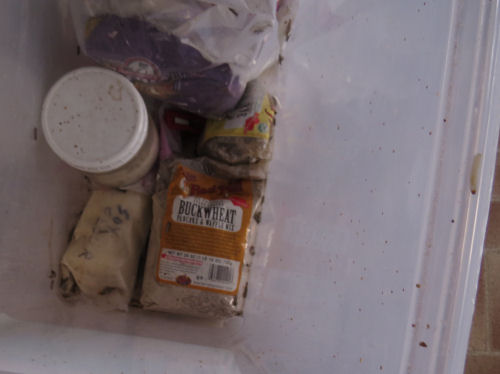 tub with packages of flour and grain moths
