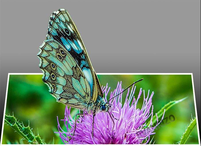 Νέες τρισδιάστατες με πεταλούδες