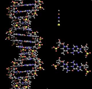Fakta-Fakta Menarik Tentang DNA