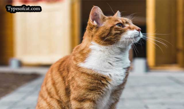 Cancer in Older Cats