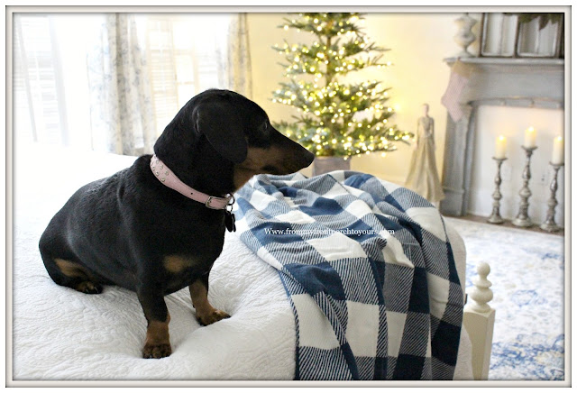 French Country Farmhouse Christmas Bedroom-Blue and White-Buffalo Check-Weenie Dog-From My Front Porch To Yours