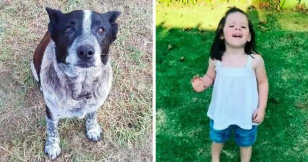 В Австралии 17-летняя полуслепая и глухая собака спасла 3-летнюю девочку