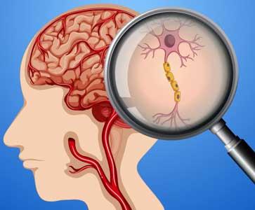 بحث عن الجهاز العصبي المركزي