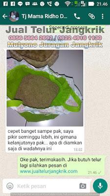 Testimoni Penjual Telur Jangkrik Bpk Mulyono Juragan Jangkrik