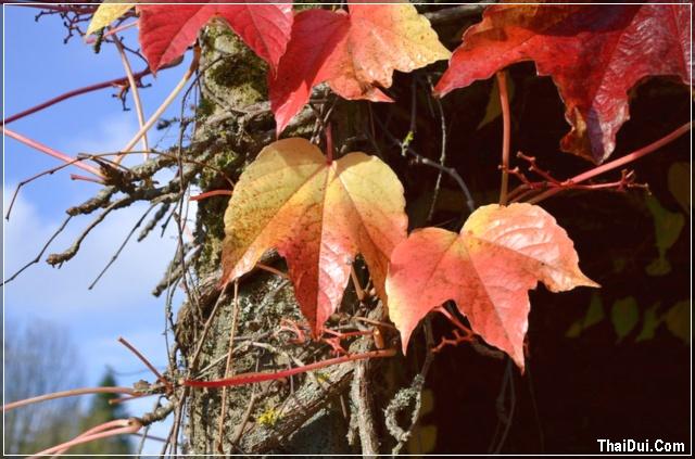 những chiếc lá mùa thu