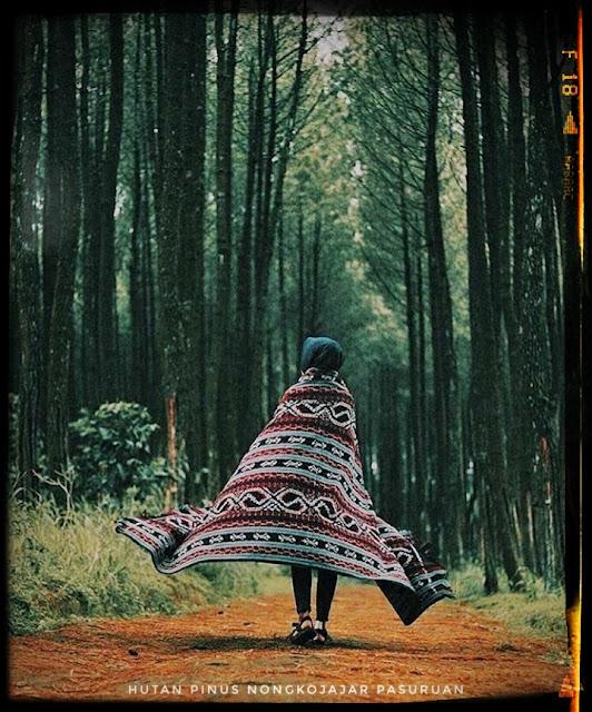 Hutan Pinus Ekowisata Nongkojajar Pasuruan