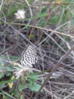 butterfly in bush