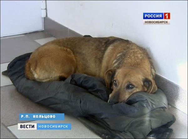 Chú chó được mệnh danh Hachiko của Nga khiến hàng triệu trái tim lay động