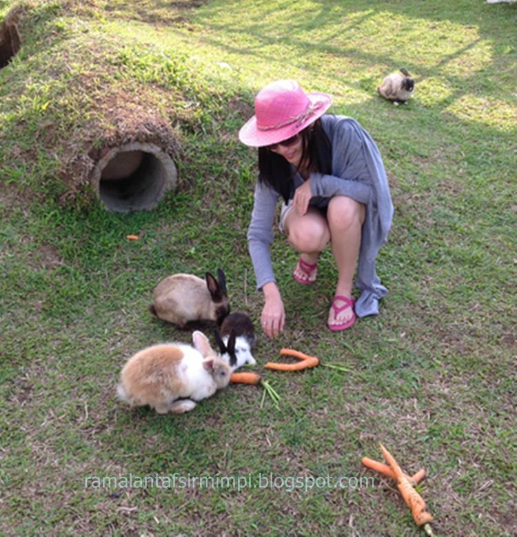 Hewna kelinci adalah merupakan hewan peliharaan yang bisa dijadikan sebagai sahabat terba 12 Arti Mimpi Melihat Kelinci Menurut Primbon Jawa yang Lengkap
