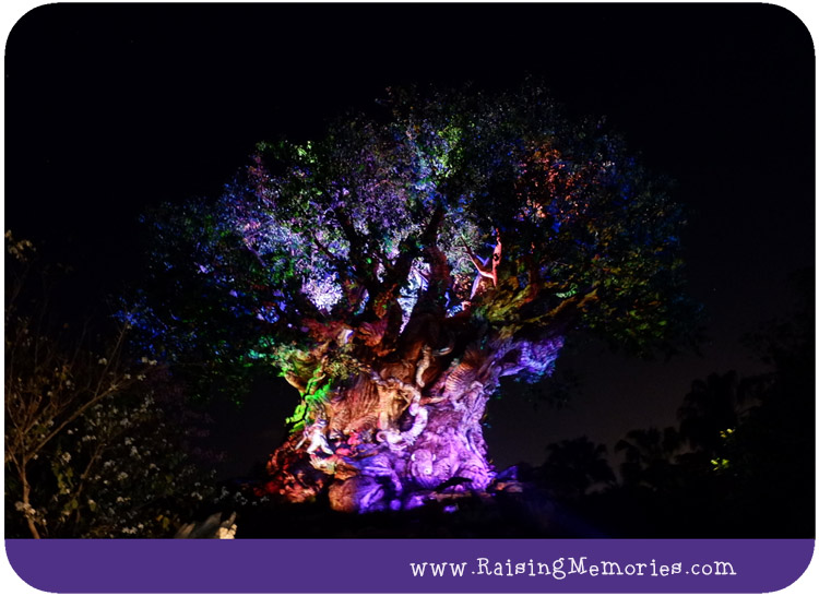 The Tree of Life at Night Disney World
