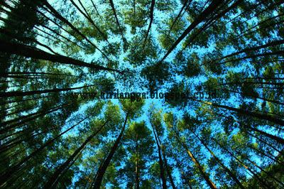 Perbedaan Hutan Produksi,Hutan Konservasi,Hutan Lindung