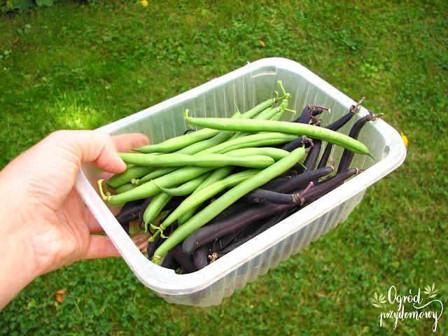 plony warzyw, ogród przydomowy