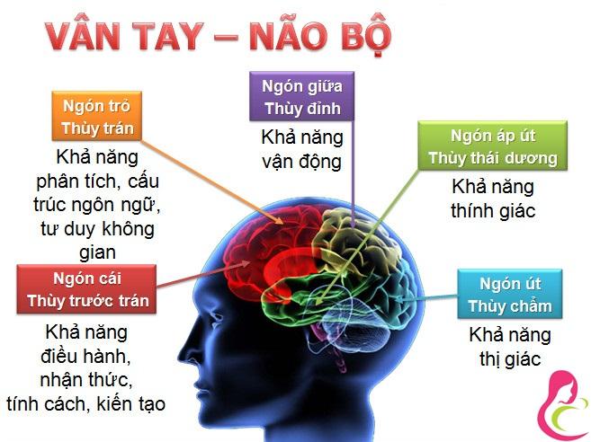 5 ngón tay và các dây thần kinh ở bộ não