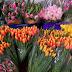 Свято наближається: ціни на квіти у київських крамницях - сайт Деснянського району